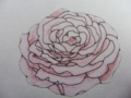rozet