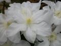 Ice Blue TM Evipo003 / Patio & Garden collection