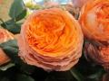 Orange Romantica