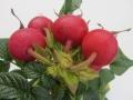 belle-poivine