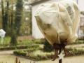 Kälteschutz-Rosen-3628415-blp-videx